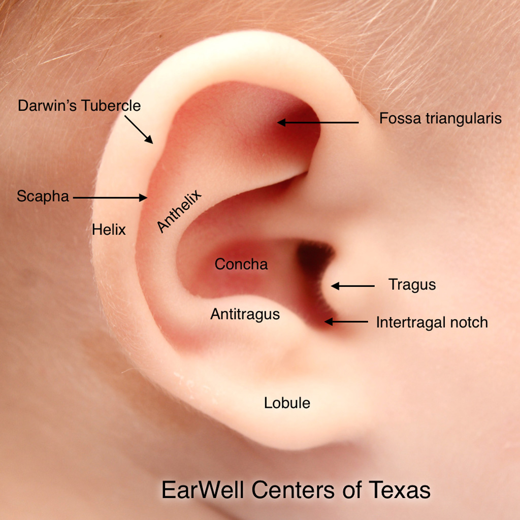 Infant Ear Deformities Anatomy of a Normal Infant Ear EarWell Centers of Texas